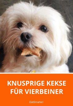 Knusprige Kekse für Vierbeiner | eatsmarter.de