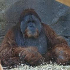 Animal Tricksters - Virginia Zoo in Norfolk