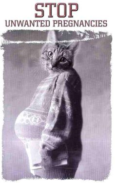 how to tell if a cat is spayed