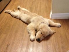 Twitter / TwistedSifter: What a Lazy Sunday Looks L ...
