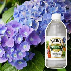 hydrangea garden care 10 Secret Ingredients That Can Help Your Garden Grow Garden Care, Organic Gardening, Gardening Tips, Vegetable Gardening, Gardening Gloves, Gardening Courses, Gardening Direct, Beginners Gardening, Vintage Gardening