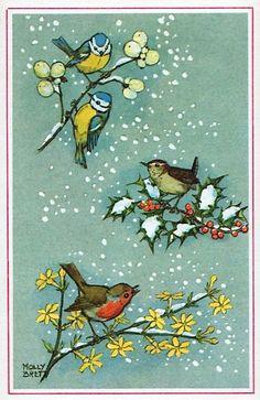 Tits, wren and robin with holly, jessamine Winter Illustration, Christmas Illustration, Illustration Art, Vintage Book Art, Bird On Branch, Bird Cards, Little Birds, Vintage Christmas Cards, Pictures To Paint