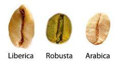 #Curious #Coffee #Libérica o Excelsa; su uso es mayoritariamente farmacológico…