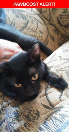 Is this your lost pet? Found in Hamilton, OH 45015. Please spread the word so we can find the owner!  All black with a little white patch on her chest piercing gold eyes ,shes a female, looks approximately six months of age appears to be  just spaded  Near Hooven Ave & Van Hook Ave
