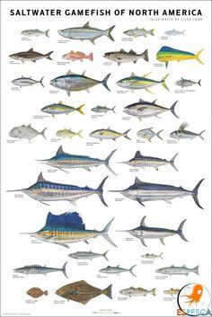 Infografías de peces 26