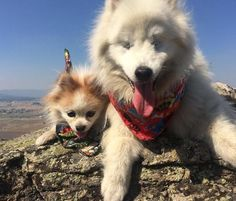 """""""They are hiking buddies. We attach a leash together and Zen does the leading."""""""