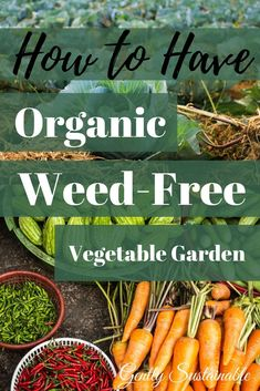 to Have a Weed-Free Vegetable Garden An organic vegetable garden is do-able! Check out my simple system! Weed free gardening with organic methodsAn organic vegetable garden is do-able! Check out my simple system! Weed free gardening with organic methods Gardening Supplies, Growing Tomatoes, Growing Vegetables, Growing Plants, Vegetable Garden Planner, Vegetable Gardening, Veggie Gardens, Potager Bio, Garden Weeds
