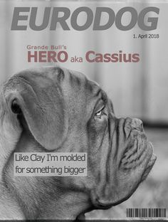EURODOG Cover .. April Fools #DoguedeBordeaux #dog #Cassius #cover #Hero #Clay #magazine
