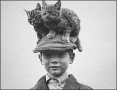 "Dan Flynn et ses chats ""Irish Travellers"""