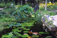 7 Tips for Planting Your Pond - for More Gardening Tips, Check out http://www.kincaidplantmarkers.com/.