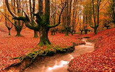 Autumn Nature Hd wallpaper by Jac_KY Nature Hd, Image Nature, Autumn Nature, Autumn Forest, Autumn Trees, Autumn Fall, Forest Path, Redwood Forest, Forest Wallpaper
