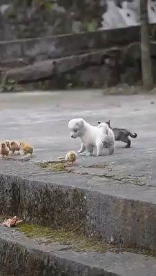 Little Besties - Tiere / Animals - Adorable Animals Cute Little Animals, Cute Funny Animals, Funny Dogs, Cute Cats, Funny Birds, Very Cute Puppies, Puppy Play, Cute Animal Videos, Cute Videos