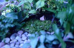 A little secret garden for secret friends!