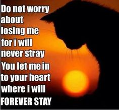 For those we love who are over the Rainbow Bridge Cat Quotes, Animal Quotes, Cat Sayings, Happy Quotes, Crazy Cat Lady, Crazy Cats, Cute Cats, Funny Cats, Animals And Pets