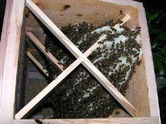 Výsledok vyhľadávania obrázkov pre dopyt japanese hives