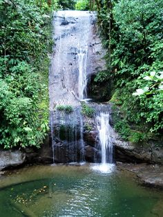 La bahía Málaga in Colombia is surrounded by a dense jungle. It gives home to numerous types of animals like frogs, saurians, corals and snakes. #palenquetourscolombia #travelandmakeadifference #waterfall #travel #colombia #nature #flora