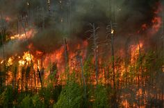 Wildfire is a constant threat
