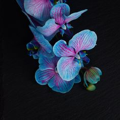 Голубая орхидея гей видео фото 530-833