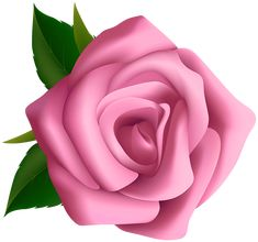 transparent pink rose clipart Clipart Png, Rose Clipart, Flower Clipart, Flower Art Images, Flower Pictures, Pink Rose Flower, Purple Roses, Rose Vine Tattoos, Beautiful Flowers Wallpapers
