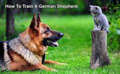 How To Train A German Shepherd    15 Lovely Reasons Why German Shepherds Make The Best Pets Ever    http://www.germanshepherdfacts.us