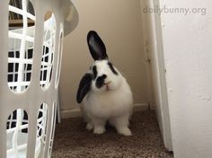 Bunny is receiving a signal! - July 10, 2014