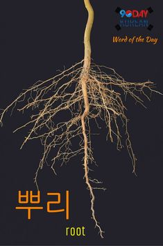 """Here's today's Korean word of the day!  The word  means root.""""  If you cant read this word yet, download our free EPIC Korean reading guide by clicking the link in our bio and well teach you in 60 minutes.  Repin if this was helpful!  #90DayKorean #K"""