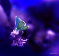 * Butterfly *