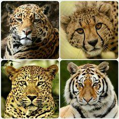 10 Ideas De Animals Animales En Peligro De Extincion En Peligro De Extincion Especies En Peligro