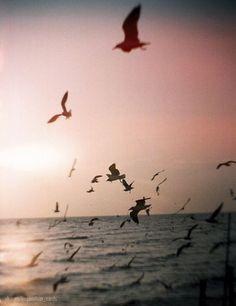 Сохранённые фотографии | 963 фотографии