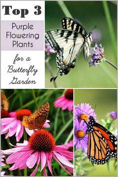 top purple plants for a butterfly garden