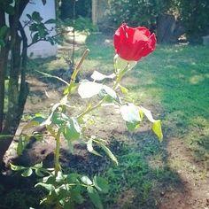y en cada flor de mi jardín, vas a estar...