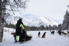 Dog sledding with our partner is warmly recommended! 🐕 As a guest at Lyngen North you may book this exciting hands-on tour in the Reisa Valley including pickup/drop off at the doorstep of your accommodation. Glass Igloo Hotel, Snow Travel, Stunning View, Winter Holidays, Alps, Arctic, Norway, Husky, Northern Lights