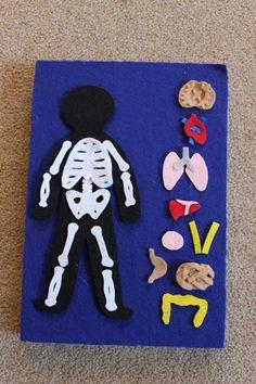 Image result for bones felt board