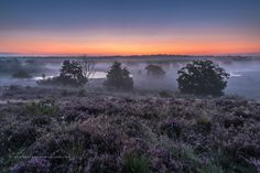 'before sunrise Maasduinen' - A beautiful sunrise at the National Park Maasduinen near Afferden, North Limburg.