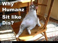 #lol #cat #funny #pet #caption #pics.