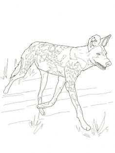 african wild dog or painted hunting dog coloring page from wild dogs category select from 28148 printable crafts of cartoons nature animals