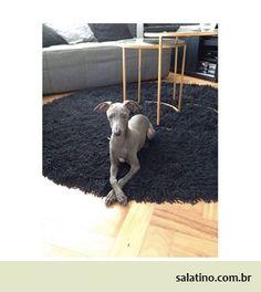 #dog #salatino #clubesalatino #canil #perro #dogs #cute #love #nature #animales #dog #ilovemydog #ilovemypet #cute #galgos #greyhound #galgoespanhol #galgo