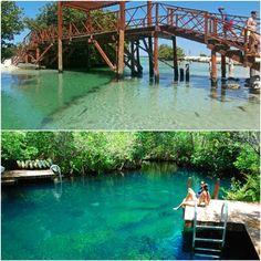 Let's go swimming! River or cenote?  / ¡Vamos a nadar! ¿El río o el cenote?