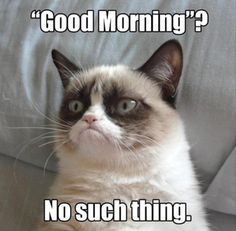 Grumpy Cat: Good Morning? No Such Thing!
