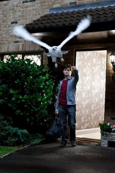 """Daniel radcliffe portrays harry potter with hedwig the owl in a scene from """"harry potter and the deathly hallows: part Harry James Potter, Harry Potter World, Magia Harry Potter, Mundo Harry Potter, Harry Potter Universal, Harry Potter Memes, Potter Facts, Hermione Granger, Ron Et Hermione"""