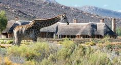 Taken at Aquila Private Game Reserve, where you can see the big five by horseback! It's pictures like these that make foreigners think we all live in the bush without electricity and hunt for our food. We say, with pride, TIA - This Is Africa!  http://www.capetownmagazine.com/wildlife-safari/Giddy-up--and-get-on-that-horse/45_52_2208