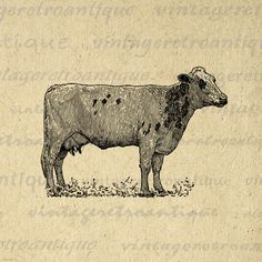 Digital Dairy Cow Image Printable Illustration Graphic Download Vintage Clip Art. High resolution digital graphic. This vintage printable digital image is great for transfers, printing, tea towels, and many other uses. Real antique artwork. This digital image is high quality at 8½ x 11 inches large. Transparent background version included with every graphic.