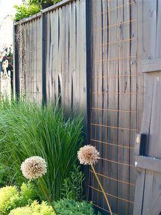 Wire Mesh Trellis | Dw~ Garden | Pinterest | Wire Mesh, Gardens And Arbors