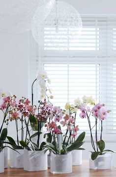 Orchids. I must put mine in similar vases or pots... this ones look so chic!