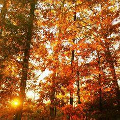 Fall in Duluth, #Georgia.