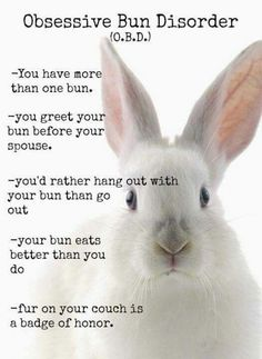 /r/rabbits is an open community where users can learn, share cute pictures, or ask questions about rabbits. Please note we are a *pet rabbit*. Funny Animal Memes, Cute Funny Animals, Funny Animal Pictures, Rabbit Life, House Rabbit, Cute Baby Bunnies, Funny Bunnies, Bunny Meme, Funny Rabbit