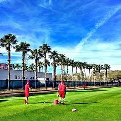 December isn't too early to dream about palm trees and baseball, is it? #SpringTraining