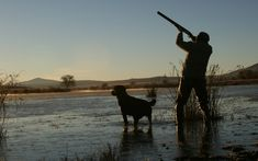 Best All-Around Hunting Dogs | Outdoor Channel