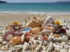 Beach combing in Okinawa Japan for seashells and sea glass