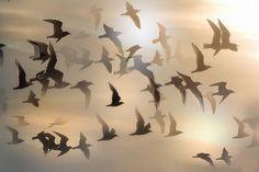 petitpoulailler: ohdarlingdankeschoen: Sea Gulls by Gator 5 on Flickr